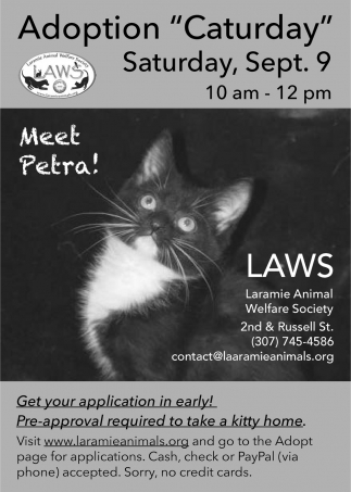 Adoption ''Caturday''