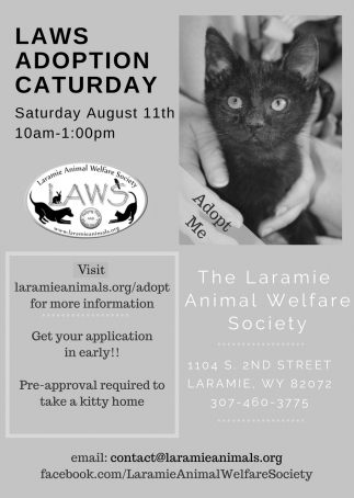 Laws Adoption Caturday