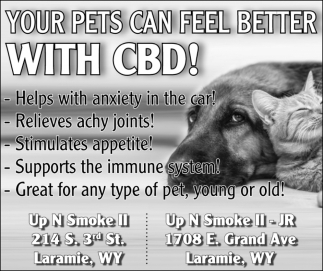 Your Pets Can Feel Better with CBD!
