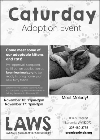 Caturday Adoption Event